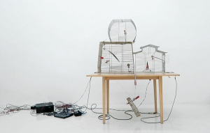 Jaula nerviosa modified birdcages, table, strings, piezos, transducer, amp, motor and macaw feather.Rubén D´Hers, 2016